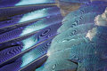 Blue feather background. Royalty Free Stock Photo