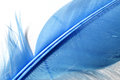 Blue feather detail Royalty Free Stock Photo