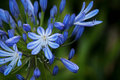 Blue flower in a corner on a blurry green background Royalty Free Stock Photo