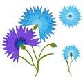Blue flower cornflower isolated on white background. Cartoon centaurea cyanus illustration