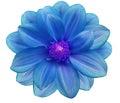 Blue hydrangea flower on white background