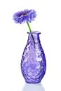 Blue flower in vase on white Stock Image