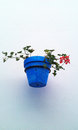 Blue flowerpot on a wall white Royalty Free Stock Image