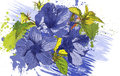 Blue flowers drawn