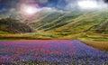 Blue Flowers Field Magic Lands...