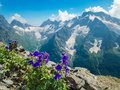 Blue flowers in the foreground. Summer mountain landscapes of Karachay Cherkessia, Dombay, Western Caucasus. Royalty Free Stock Photo