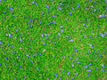 Blue flowers on the grass ground abstract Stock Image