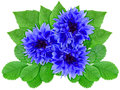 Blue flowers with green leaf Stock Photos