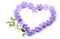 Blue flowers in a shape of a heart over white Royalty Free Stock Photo