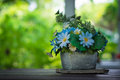 Blue flowers in stone vase still life Stock Photography