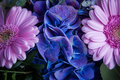 Blue flowers between two pink chrysanthemums Royalty Free Stock Photo