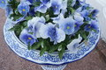 Blue flowers in vase white and with and white inside Royalty Free Stock Images