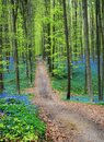 Blue Forest Royalty Free Stock Photo