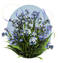 Blue Forget Me Not Stock Images