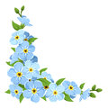 Blue forget-me-not flowers. Vector corner background. Royalty Free Stock Photo