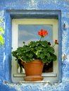 Blue framed window close up vertical with geranium in pot Royalty Free Stock Images