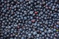 Blue fruity background of small ripe blueberries Royalty Free Stock Photo