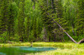 Blue geyser lake in Altay mountains with beautiful green forest Royalty Free Stock Photo