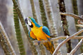 Blue-and-gold macaw in nature surrounding Stock Images