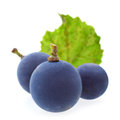 Blue grape berry Stock Photography