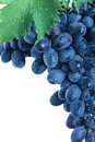 Blue grape cluster with leaves Royalty Free Stock Photo
