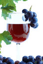 Blue grape cluster and red wine Royalty Free Stock Photo