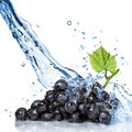 Blue grape with water Royalty Free Stock Photo
