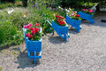 Blue handmade carts decorated with dahlias Royalty Free Stock Photo