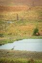 Blue Heron In Autumn