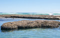 Blue Holes Beach on the Coral Coast Royalty Free Stock Photo