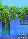 Blue house with green wooden window and  and yellow flowers Royalty Free Stock Photo
