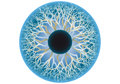 Blue human eye vector iris and pupil illustration Stock Image
