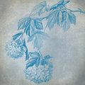 Blue Hydrangea Royalty Free Stock Images