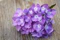 Blue hydrangea flower Royalty Free Stock Photo