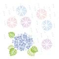 Blue hydrangea and umbrellas in rainy season
