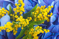 Blue hydrangeas and yellow asters Stock Image