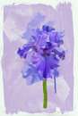 Blue iris background watercolors Royalty Free Stock Photos