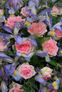Blue irises and pink roses in bridal arrangement a weding Royalty Free Stock Photo