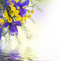 Blue irises with yellow daisies Royalty Free Stock Photo
