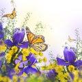 Blue irises with yellow daisies Royalty Free Stock Photo