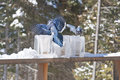 Blue Jays on Ice Lantern Feeders Stock Images