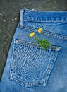 Jeans pocket with plant branch on the old wooden background. Mockup for design Royalty Free Stock Photo