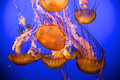 Blue Jellies Royalty Free Stock Image
