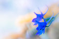 Blue larkspur flowers with light background Stock Image
