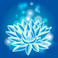 Blue lotus Royalty Free Stock Photos