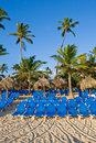 Blue lounges on sand beach under palms Stock Photos