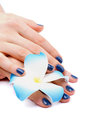 Blue manicure woman s hands with and white flower of frangipanis on white background Royalty Free Stock Photos