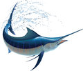Blue marlin swinging water sprays realistic vector illustration isolated white background Royalty Free Stock Photography