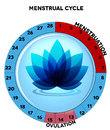Blue menstrual cycle chart with flower average twenty eight days menstruation and ovulation beautiful at the middle Royalty Free Stock Photo