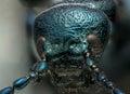 Blue metallic bug macro head shot Royalty Free Stock Photo